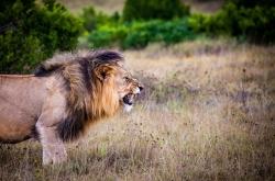 addo-elephant-national-park-12